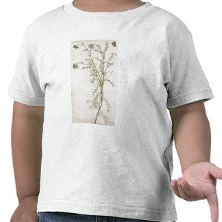 Chamaemelum Allioni nobile c 1568 Camiseta