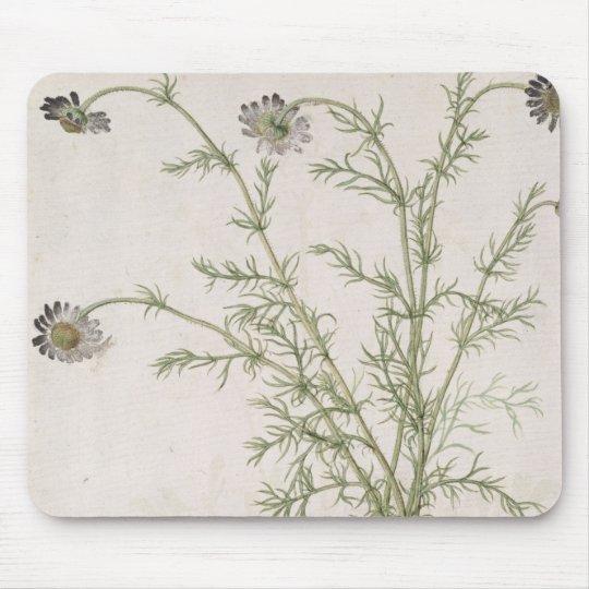 Chamaemelum nobile Allioni, c.1568 Mouse Pad