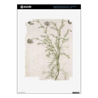 Chamaemelum nobile Allioni, c.1568 iPad 3 Decals