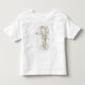 Chamaemelum nobile Allioni, c.1568 T-shirts