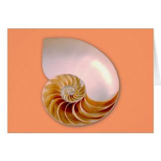Chambered Nautilus Card
