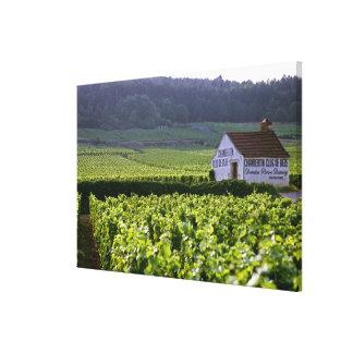 Chambertin Clos de Beze Grand Cru vineyard with Gallery Wrap Canvas