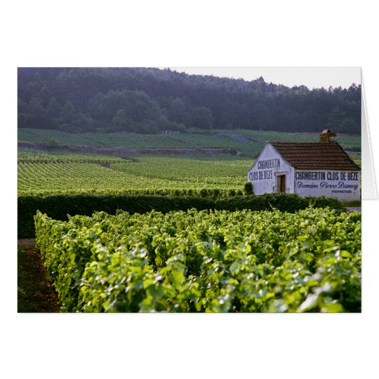 Chambertin Clos de Beze Grand Cru vineyard with Card