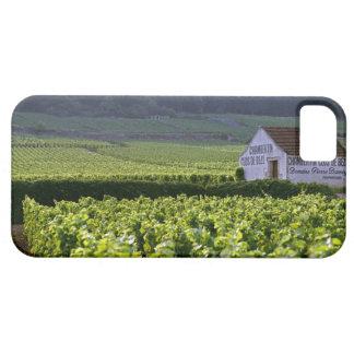 Chambertin Clos de Beze Grand Cru vineyard with iPhone SE/5/5s Case