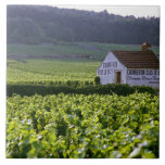 Chambertin Clos de Beze Grand Cru vineyard with Large Square Tile