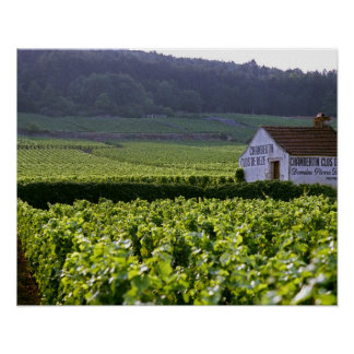Chambertin Clos de Beze Grand Cru vineyard with Poster