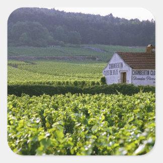 Chambertin Clos de Beze Grand Cru vineyard with Square Sticker
