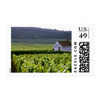 Chambertin Clos de Beze Grand Cru vineyard with Stamp