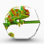 """Chameleon Award<br><div class=""""desc"""">Chameleon</div>"""
