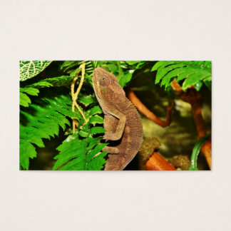 Chameleon Camouflaging Brown Business Card
