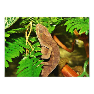 Chameleon Camouflaging Brown Card