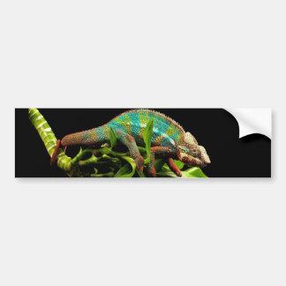 Chameleon Car Bumper Sticker