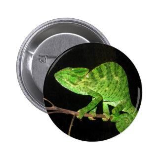 Chameleon (Chamaeleo zeylanicus) Button
