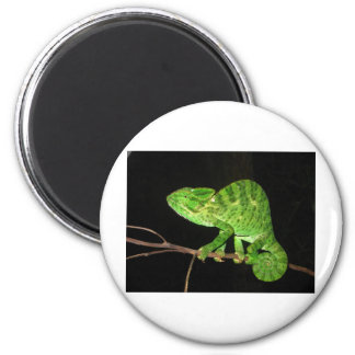 Chameleon (Chamaeleo zeylanicus) Magnet