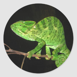 Chameleon (Chamaeleo zeylanicus) Classic Round Sticker