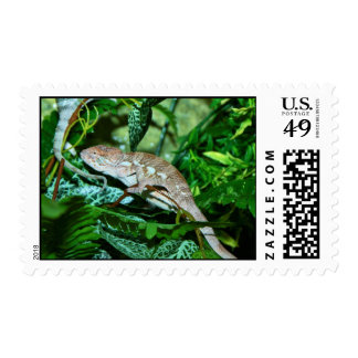 Chameleon changing in green environment postage