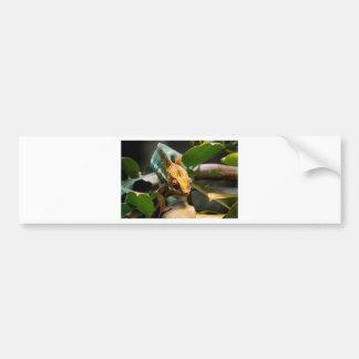 Chameleon coming forward bumper sticker