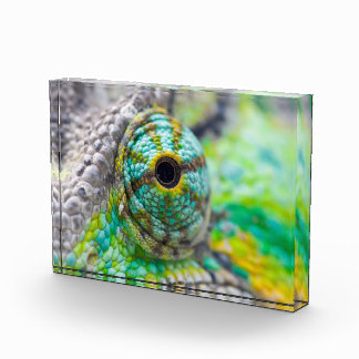 Chameleon eye award