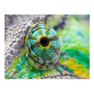 Chameleon eye postcard