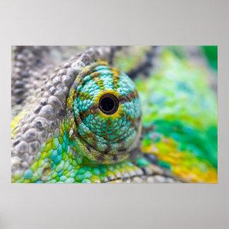 Chameleon eye poster