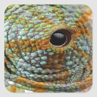 chameleon eye search peace square sticker