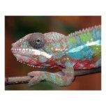 chameleon invitation