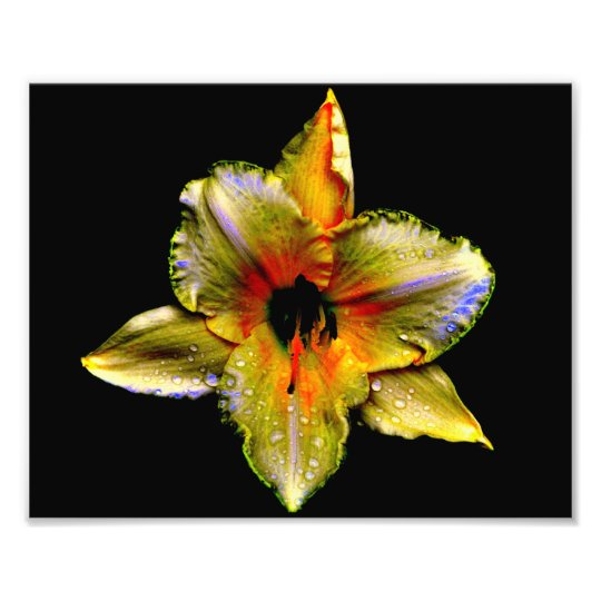 Chameleon Iris at Midnight by Verde Photo Print
