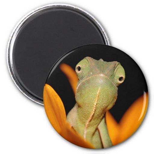 chameleon magnets