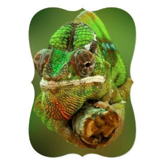 Chameleon Photo Card