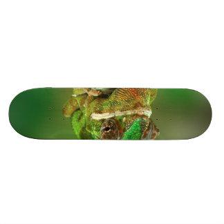 Chameleon Photo Skateboard Deck