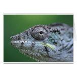 chameleon portrait greeting card