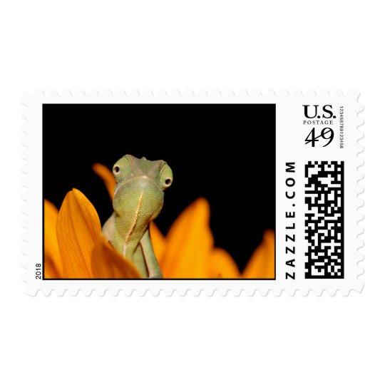 chameleon postage