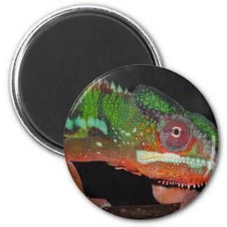 Chameleon Refrigerator Magnet