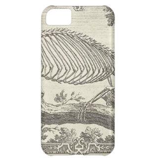 Chameleon Skeleton Illustration Case For iPhone 5C