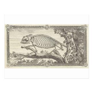 Chameleon Skeleton Illustration Postcard