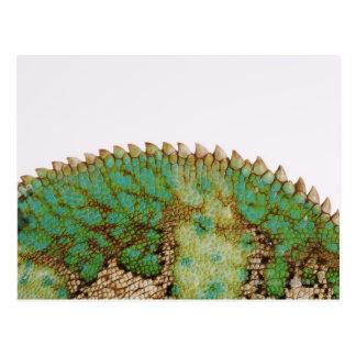 Chameleon skin change postcard