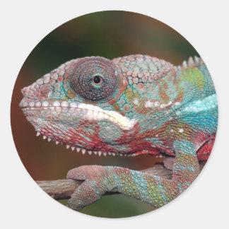 chameleon round sticker