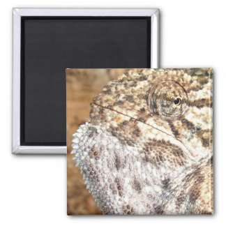 Chameleon with Attitude 2 Inch Square Magnet