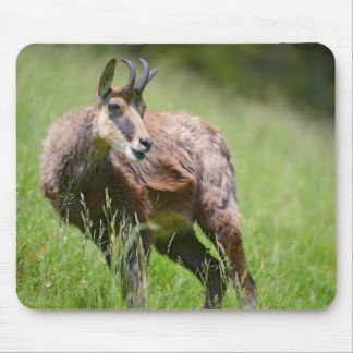 Chamois in the grass mouse pad