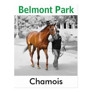 Chamois Postcard
