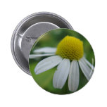 Chamomile bloom 2 inch round button