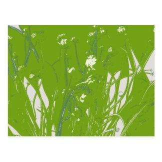 chamomile field green postcard