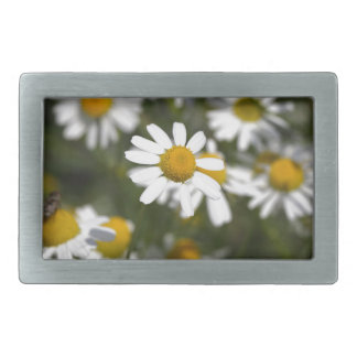 Chamomile flowers belt buckle