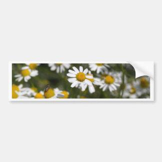 Chamomile flowers bumper sticker