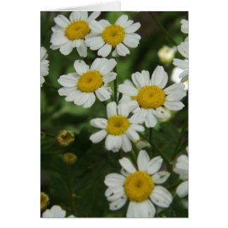 Chamomile Flowers Card