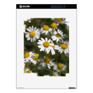 Chamomile flowers iPad 2 decal