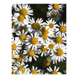Chamomile flowers letterhead