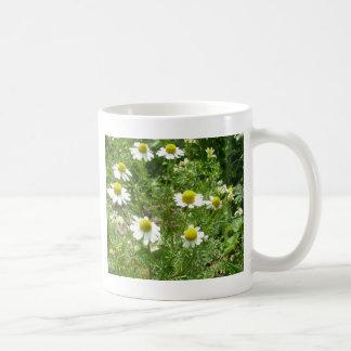 chamomile Flowers Coffee Mugs