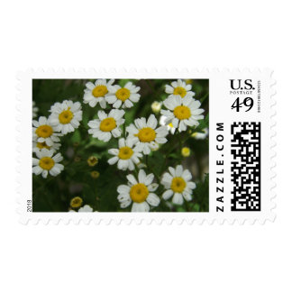 Chamomile Flowers Postage Stamps