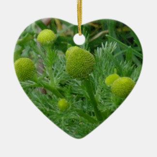 Chamomille, Matricaria matricarioides Ceramic Ornament